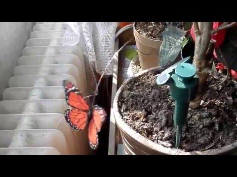 Solární motýl v květináči - solární hračky v praxi