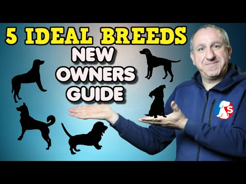 5 DOG BREEDS IDEAL FOR NEW DOG OWNERS - These are my faviourits breed of dogs