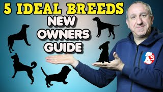5 DOG BREEDS IDEAL FOR NEW DOG OWNERS  These are my faviourits breed of dogs