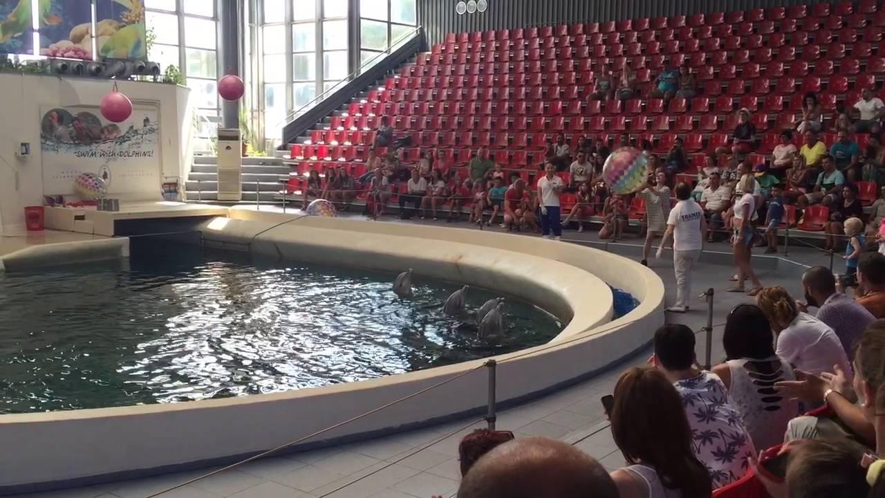 Cả nhà xem biểu diễn Cá Heo (dophil show) 4