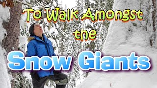 To Walk Amongst the Snow Giants