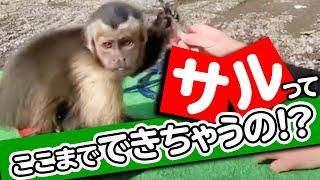 【奇跡!?】ここまでできちゃうの?猿の限界に挑戦したら最後に奇跡が・・・