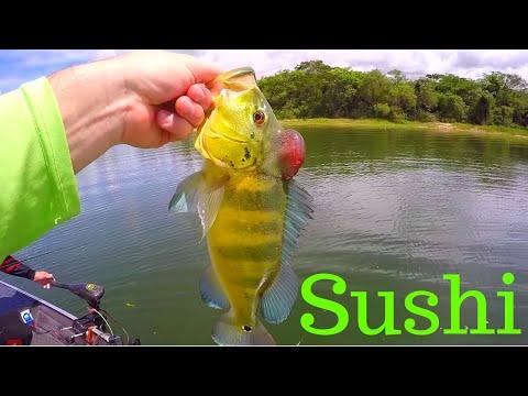 Eating RAW FRESHWATER Fish (Sashimi)
