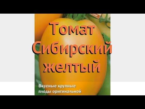 Вопрос: Сорт помидоров Сибирский киви – стоит сажать Какие отзывы?