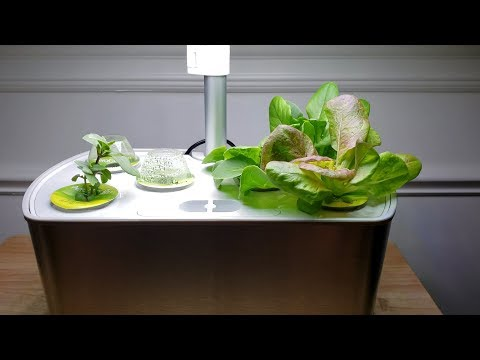 One Month With The Aerogarden: From Seed to Harvest