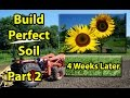 HOW to BUILD, EASY, CHEAP, Healthy Organic Garden Soil with 20,000 Sunflowers & Winter Rye Mix #2