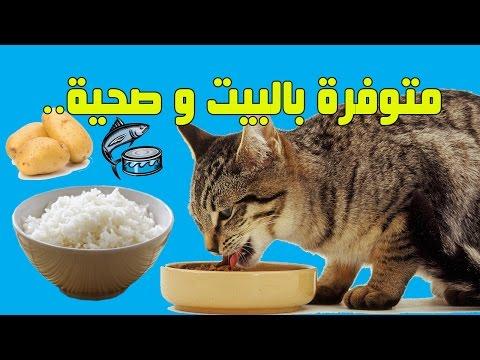 هذه الوجبات تحبها القطط ومفيدة لصحتها