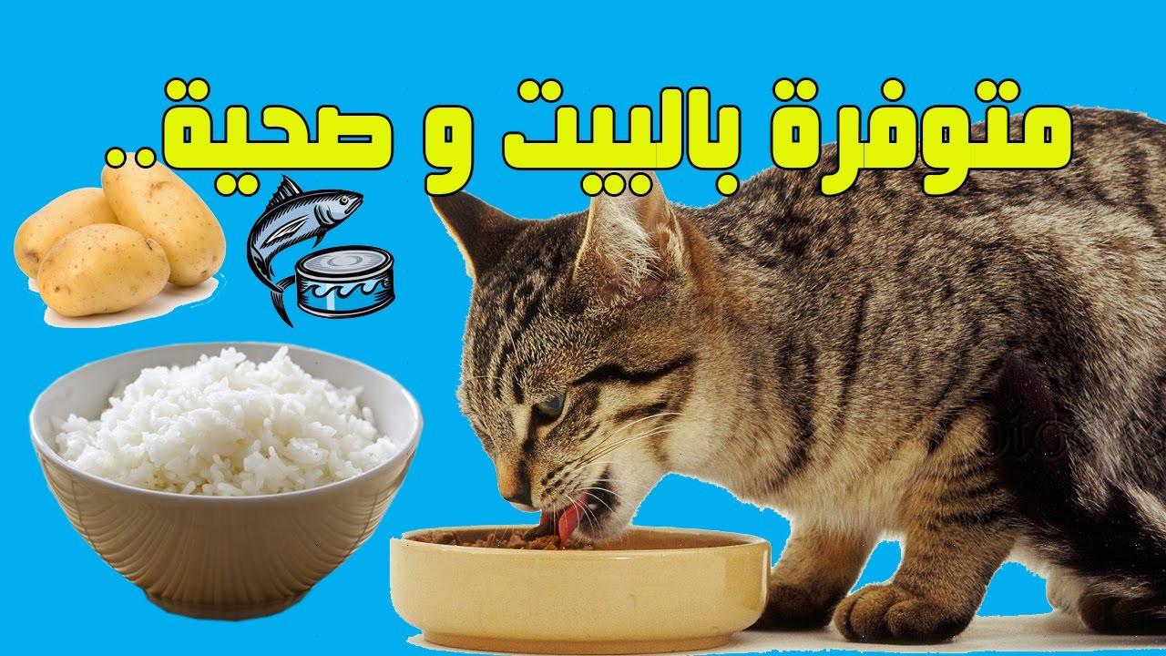 هذه الوجبات تحبها القطط ومفيدة لصحتها Youtube