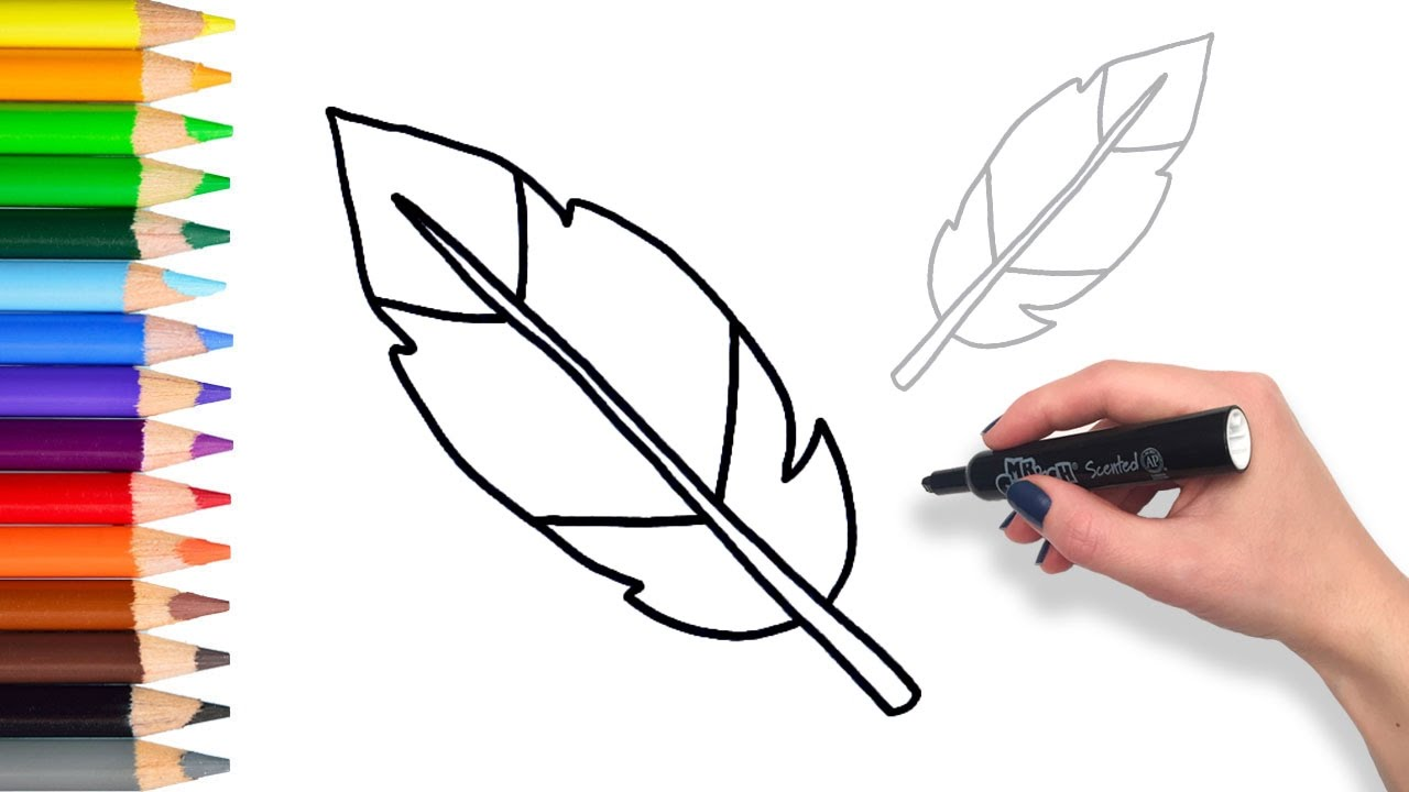 learn how to draw a feather teach drawing for kids and toddlers