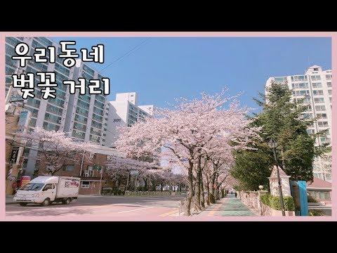 [맘보로그] 봄 내음이 풍기는 우리 동네 벚꽃거리를 소개합니다! 꼭 벚꽃축제 장소가 아닌 주변을 한번 둘러보세요 (feat. 세상에서 제일 사랑하는 아내와 딸)