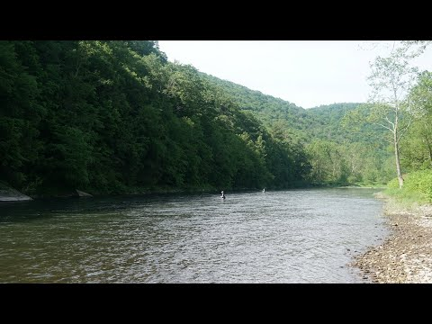 Fly Fishing In The PA WILDS! (Pine Creek Trout Fishing)
