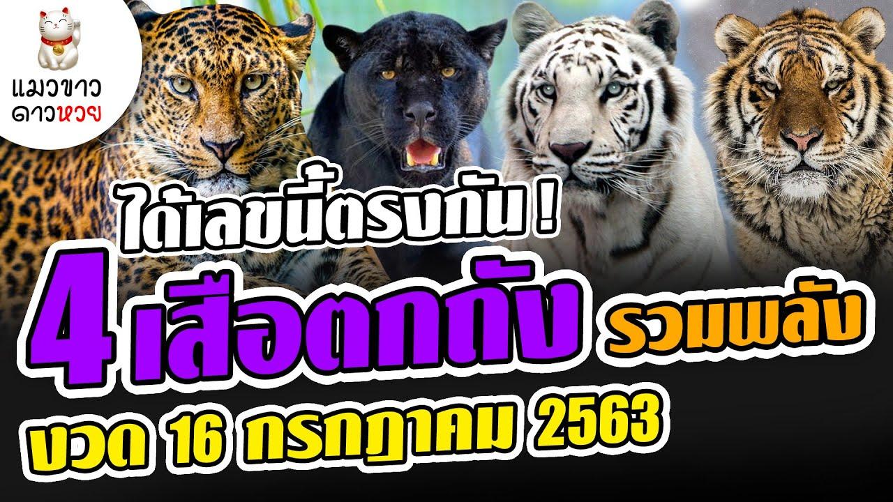 16/7/63 ได้เลขนี้ตรงกัน 4 เสือตกถังพลังเงินดี รวมพลัง หวยงวด 16 ก.ค.. 63 ( แมวขาว ดาวหวย )