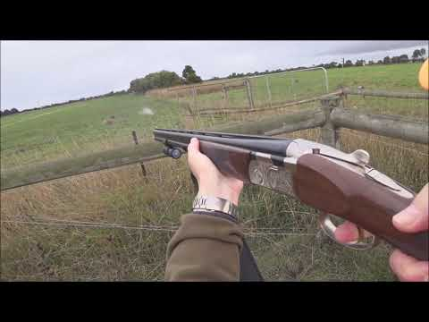 Driven Fox Hunt With Beretta Silver Pigeon 12g And Beagles Victoria 25/05/2019