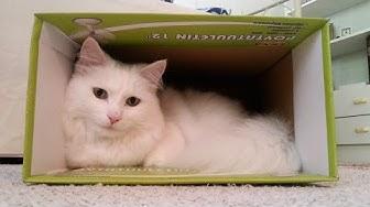 Felix-kissa poseeraa pt. II