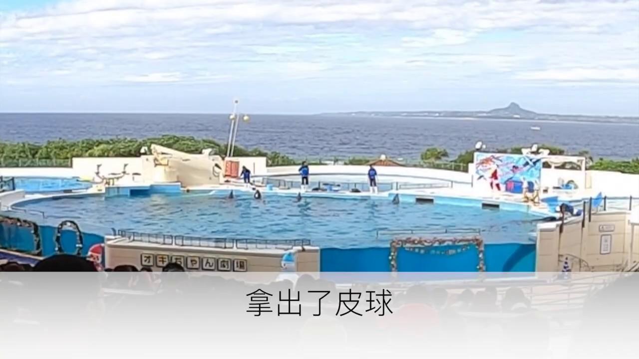 沖繩之旅3-睽違20年搭飛機出國玩(海豚秀) - YouTube