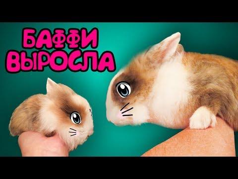 КАК РОСЛА КРОЛЯ БАФФИ ! Кот Малыш и Кошка Мурка! Приколы С КОТАМИ И КРОЛИКОМ БАФФИ! Смешные коты