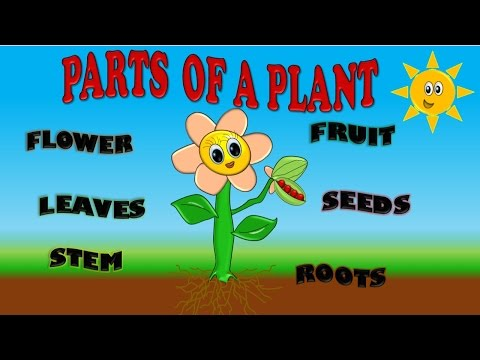 PARTS OF A PLANT FOR KIDS, PARTES DE PLANTA EN INGLES PARA NIÑOS