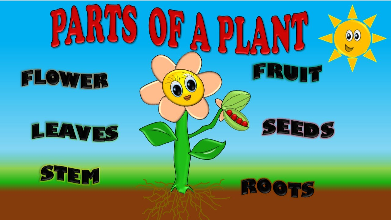 PARTS OF A PLANT FOR KIDS, PARTES DE PLANTA EN INGLES PARA NIÑOS ...
