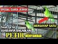 C Ijo Gacor Tembakan Sadis Suaranya Seperti Petir Menyambar Jos Buat Masteran Cucak Ijo  Mp3 - Mp4 Download