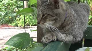 The Cats of The Ernest Hemingway Home and Museum