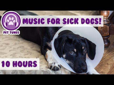 10 Hours! Relaxing Dog Music to Help Your Ill and Sick Puppy or Dog Recovering From Surgery!