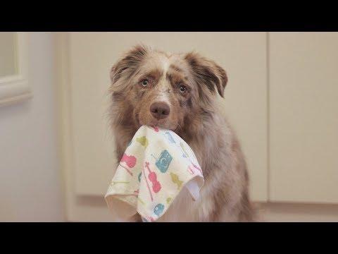 Smart Dog Cleans the House | Pekka the Australian Shepherd