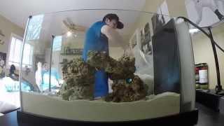 Spec 5 Gallon Nano Saltwater Aquarium Setup