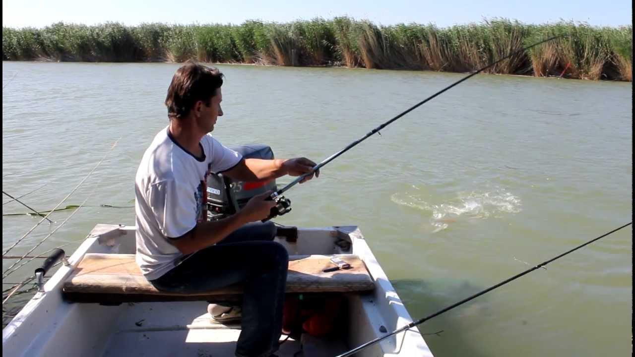 сазан его ловля с лодки