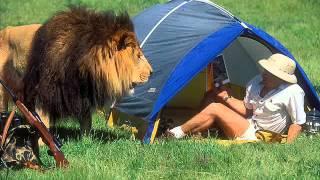Охота на львов и последствия / Lion Hunting
