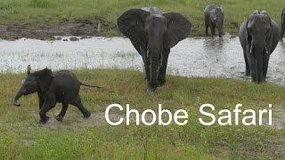 Chobe Safari Botswana 2017