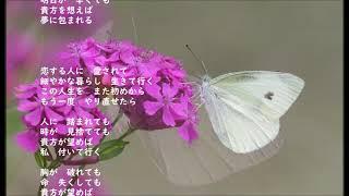 大石円 - 夏の蝶