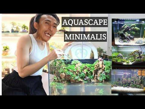 tips-&-trick-aquascape-minimalis