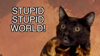 talking kitty cat stupid stupid world