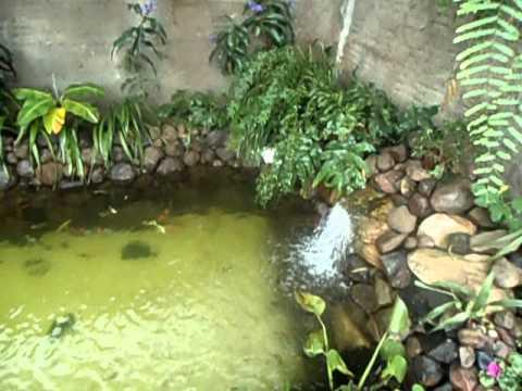 Lago familia giro com plantas youtube for Plantas para estanques pequenos