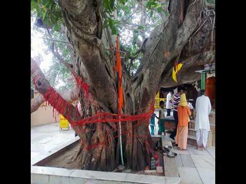 Video - प्रयाग कुंभ मेला: षष्ठ नायक होता है - अक्षयवट वृक्ष