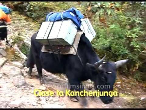 The Hidden things of Himalaya