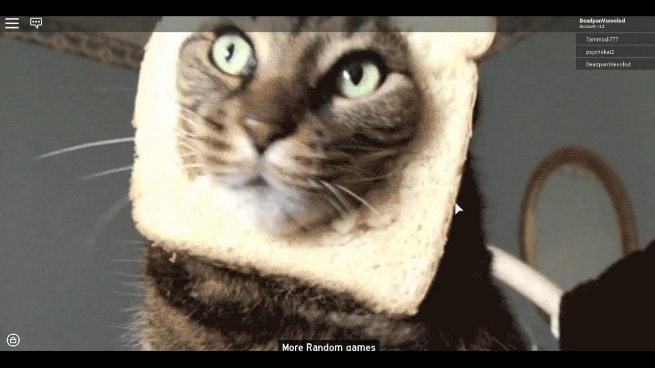 Гифка с котом бесите