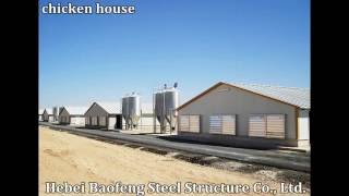 Professional Design and Manufacture Chicken House