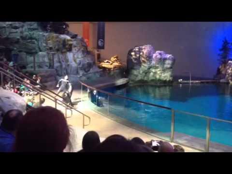 Shedd Aquarium Chicago, Illinois