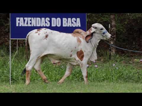 LOTE 12   ESTICADA DO BASA   BASA2137