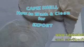 Capiz Shell, Capiz Raw, Capiz Chips, Shapes & Capiz Strands Supplier Thumbnail