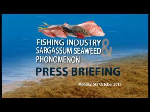 Press Briefing   Fishing Industry and Sargassum Update