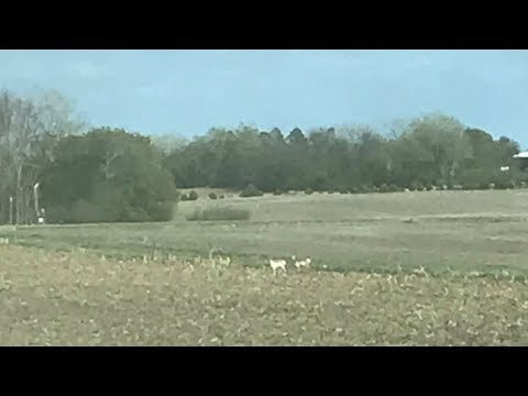 Unusual Wildlife Sighting In South-Central North Dakota