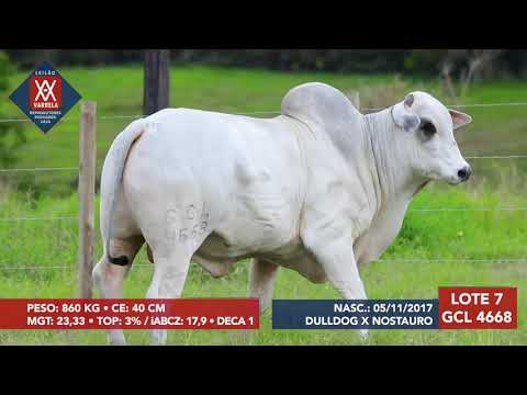 LOTE 7 GCL 4668