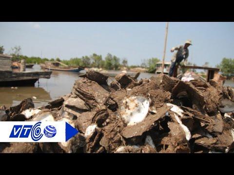 Hàu chết xếp lớp, nông dân Bến Tre 'đứng hình' | VTC
