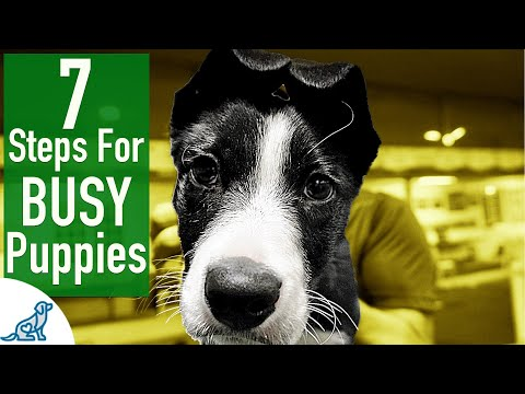 Your Puppy Training First Steps - Professional Dog Training Tips
