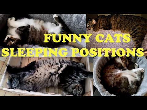 11 strange funny cat sleeping positions meaning  try