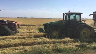 CA Rice Harvest 2015