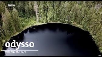 Nationalpark-Check - Wie gut sind unsere Naturschutzgebiete? | Odysso – Wissen im SWR