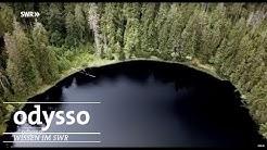 Nationalpark-Check - Wie gut sind unsere Naturschutzgebiete?   Odysso – Wissen im SWR